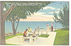 Wayside Picnic Area Florida Postcard p11325 (Image1)