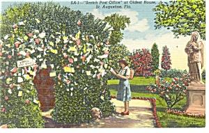 St Augustine FL  Scotch Post Office Postcard p11423 (Image1)