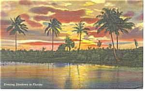 Evening Shadows in Florida Postcard p11441 1948 (Image1)