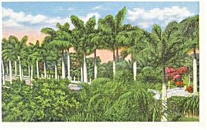 Ft Myers FL McGregor Boulevard Postcard p11562 1940 (Image1)