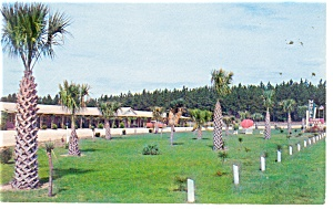 Dillon  SC  Dixie Dream Motel Postcard p11575 (Image1)