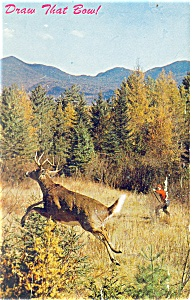 Six Point Buck Postcard p11640 ca 1962 (Image1)