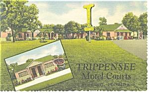Sebring FL Trippensee Motel Courts Postcard p11674 1957 (Image1)