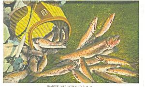 Shadow Lake NH A Days Fishing Postcard p11954 1934 (Image1)