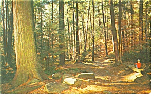 Cook Forest State Park PA Forest Cathedral Postcard p12017 (Image1)