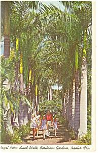Naples FL Royal Palm Walkway Postcard p12239 1964 (Image1)