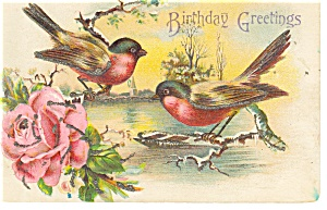 Birthday Greetings,Birds Postcard p12372 (Image1)