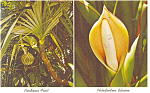 Sarasota Jungle Gardens Flower and Fruit Postcard p12476 (Image1)