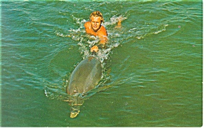 Flipper Being Trained Postcard (Image1)