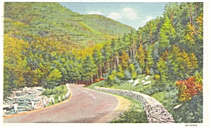 Mohawk Trail Ma State Forest Camp Postcard P12616 1934