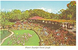 Miami s Beautiful Parrot Jungle Postcard p12835 1962 (Image1)