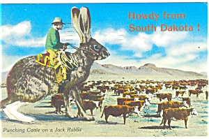 Punching Cattle On A Jack Rabbit Postcard P12844 1979