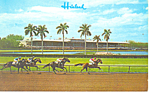 Thrilling Race at Hialeah Race Track Postcard p12897 (Image1)