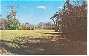 Everglades FL Lettuce Lake Turner s River Postcard p13042 (Image1)