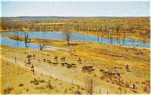 Boys Ranch Texas Herding Cattle  Postcard (Image1)