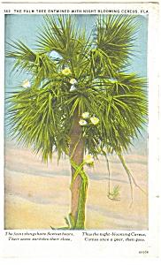 Palm Tree with Cereus Florida Postcard p13060 1928 (Image1)