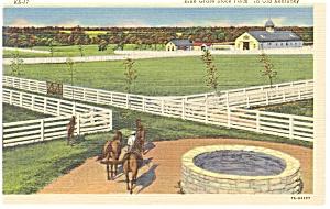 Blue Grass Stock Farm KY Postcard p13073 (Image1)