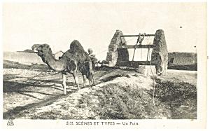 Camel Scene et Types Un Puits Postcard (Image1)