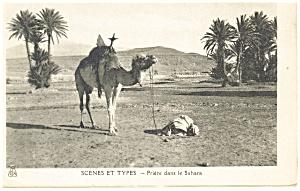 Camel Scene et Types Priere dans le Sahara Postcard p13215 (Image1)