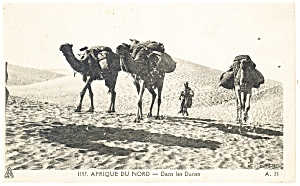 Camel Caravan in the African Desert Postcard (Image1)