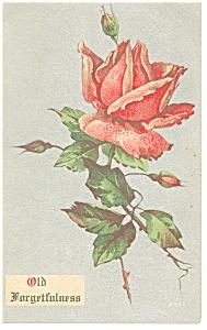 Old Forgetfulness Postcard p13264  Rose (Image1)