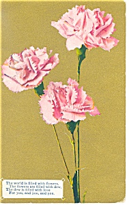 Thinking Of You Postcard p13315 Carnations (Image1)