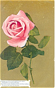 Thinking Of You Postcard p13316 Rose 1911 (Image1)