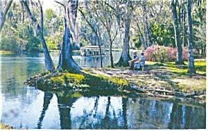 Silver Springs, Florida  Postcard 1960 (Image1)