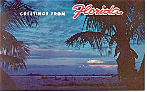 Coconut Palms in Sunset FL  Postcard p13448 (Image1)