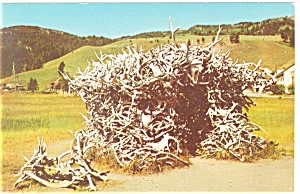 House of Antlers, Yellowstone National Park Postcard (Image1)