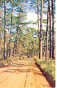 Country Road Georgia Postcard p13678 1960 (Image1)