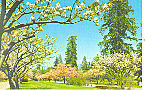 Vancouver,BC, Spring Blossoms Postcard (Image1)