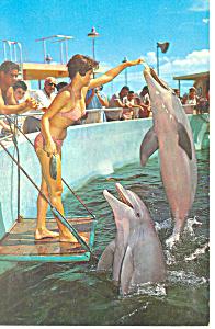 Seaquarium Miami  FL Porpoises Postcard p13853 1964 (Image1)