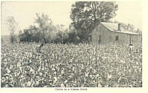 Cabin in a Cotton Field Postcard 1949 (Image1)