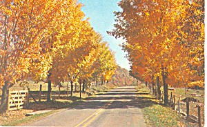 Autumn Foliage Postcard P13893