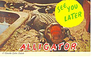A Florida Alligator Salute Postcard p13943 (Image1)