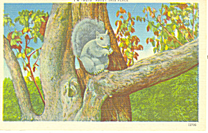 Nuts About This Place Squirrel Postcard (Image1)