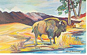 The American Bison Watercolor  Postcard p13976 (Image1)