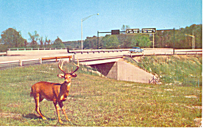 PA Turnpike Deer Crossing Postcard (Image1)