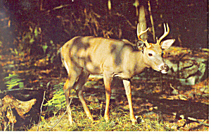 A Mighty Buck is He Postcard (Image1)