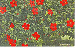 Florida Hibuscus Postcard (Image1)