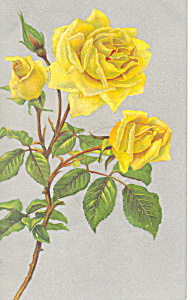 Yellow Roses Postcard (Image1)