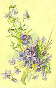 Violets Postcard (Image1)
