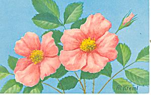 Wild Rose Postcard (Image1)