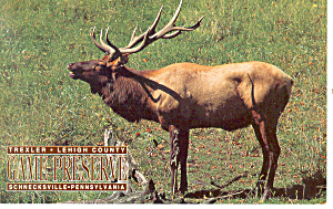 Rocky Mountain Elk Postcard (Image1)