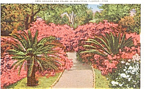 Florida Azaleas  Postcard (Image1)