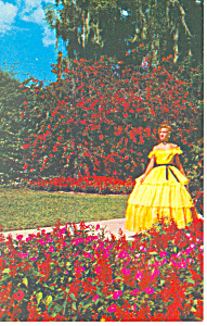 Cypress Gardens,FL, Tropical Flowers Postcard (Image1)