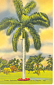 Palm Tree Florida Postcard P14937 1944