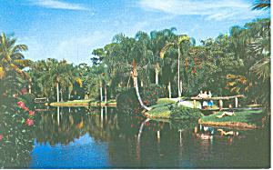 Sarasota Jungle Gardens FL Postcard p1409A (Image1)
