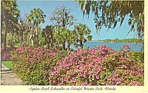Azaleas Winter Park FL Postcard p14957 (Image1)